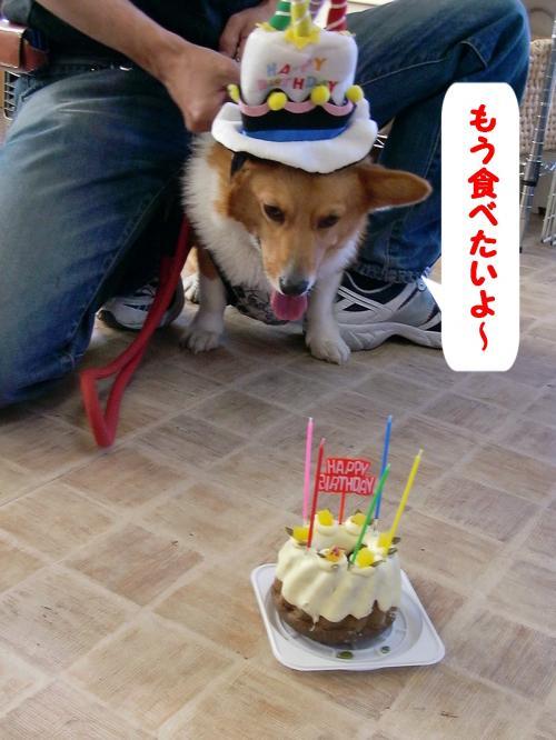 誕生日ケーキ&ぎん
