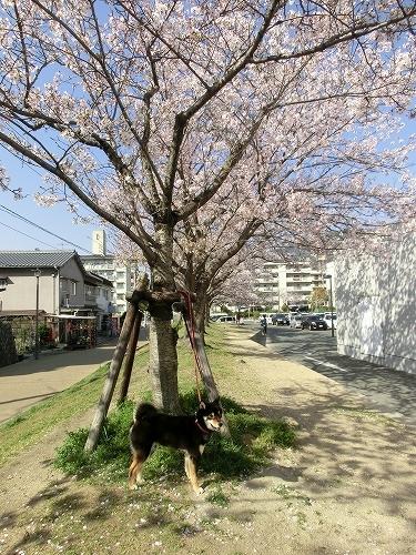 11.04.12 広公園 001