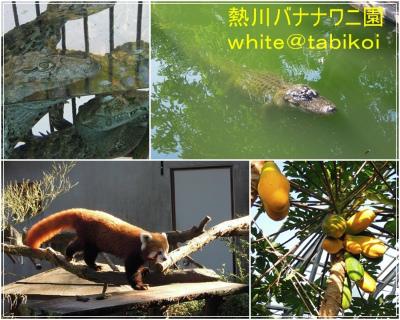 s2011‐10熱川バナナワニ園