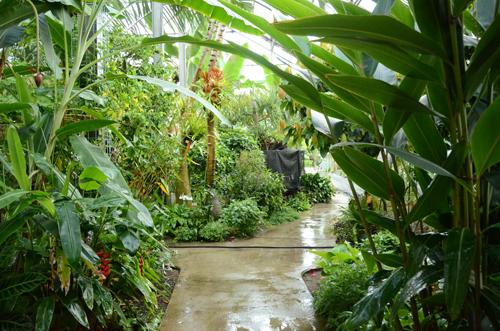 つくば植物園3