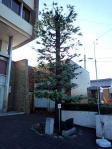 リュプケ大統領記念植樹
