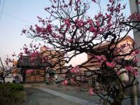 梅と天神社