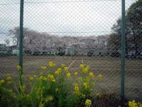 つつじヶ丘公園 テニス場
