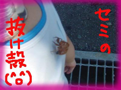 yuu_senakanisemi06.jpg