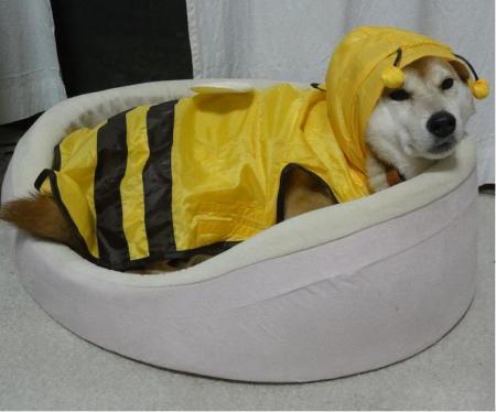 ミツバチミャーチン