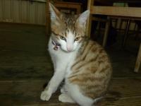 新竹甲山土鶏城の人懐っこい子猫0123