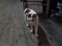 新竹甲山土鶏城でもう1匹猫