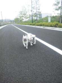 たいぞーの一歩っぽ-110523_084706.jpg