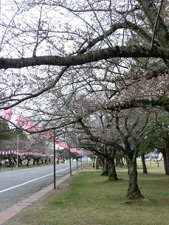 桜まつり2