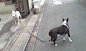 20084ranhagu4-1.jpg