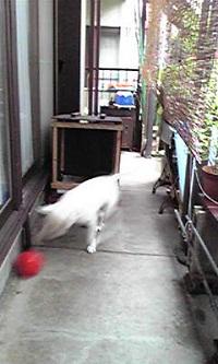 Image204.jpg