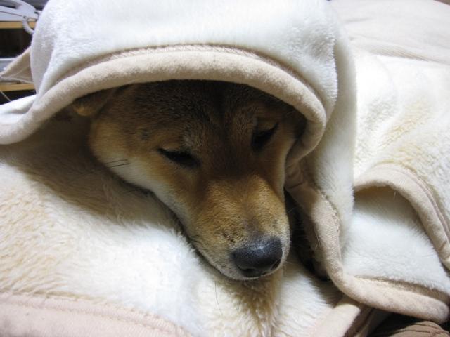 愛犬モ子2