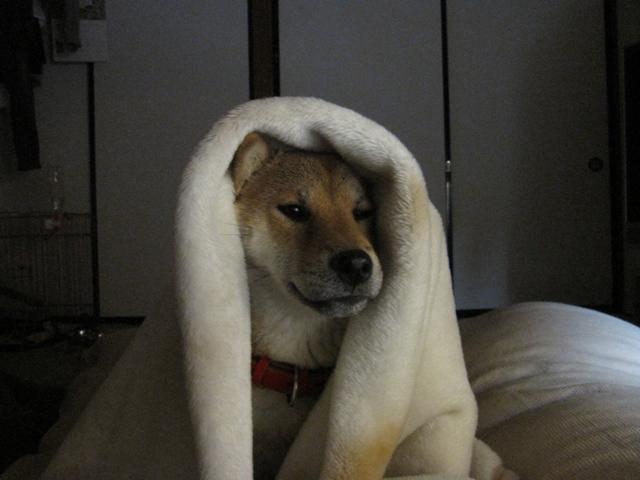寒いの!2