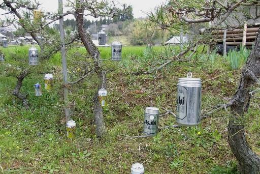 松の枝に沢山のビール缶