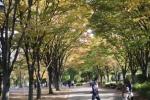 [2014-11-03]三橋公園A