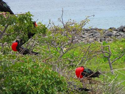 ノース・セイモア島