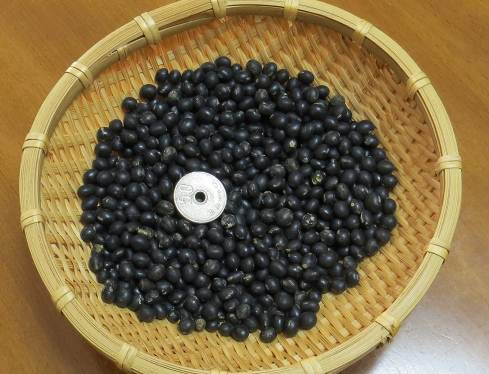 小粒黒豆収穫物