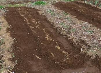 アスパラの畝に新土盛り