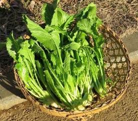 セリフォン収穫物1月