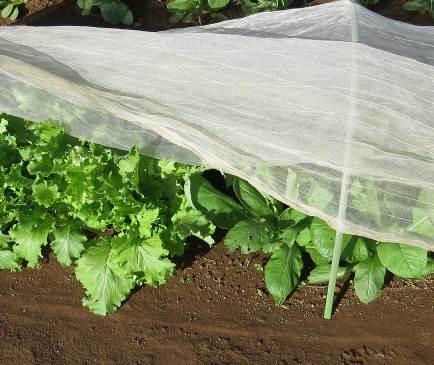 防虫ネットと無農薬野菜