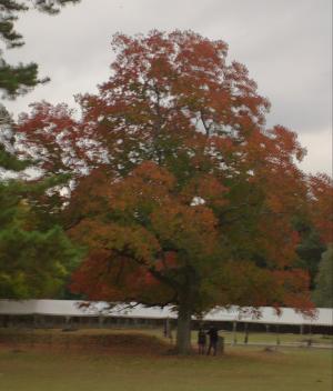奈良公園 秋