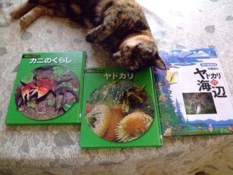 図書館で借りた科学の本!沢蟹&オカヤドカリのくらし。そしてゴマ子ちゃん!