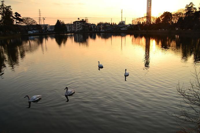 夕日と水鳥