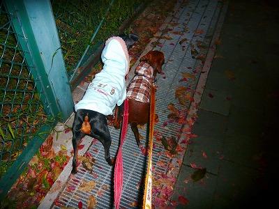 2010年11月21日_P1250302