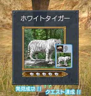 ホワイトトラ