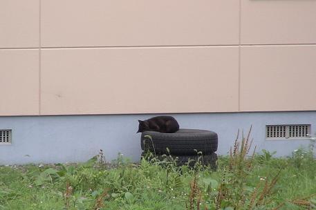 野良猫9.15