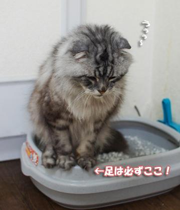 トイレ空くんのコピー
