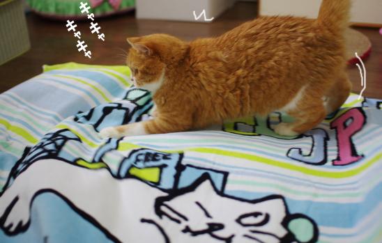 きゃきゅあー3204-34234コピー