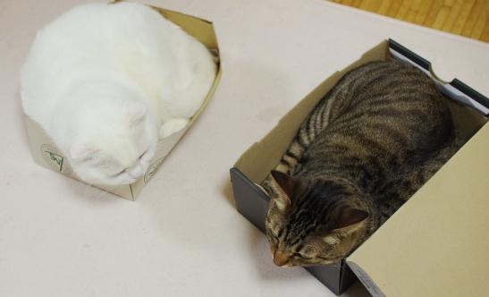 白い餅とシマシマ餅