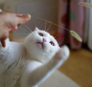 子猫ちゃんの様な顔に変身うい32043