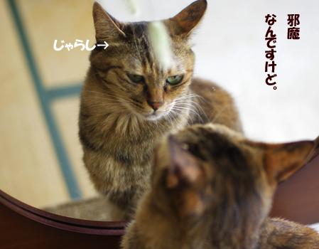 邪魔なんですけどね。¥23^4^¥34¥23423のコピー