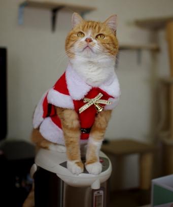 サンタの仕事は寒くてお尻がひえるのよの3