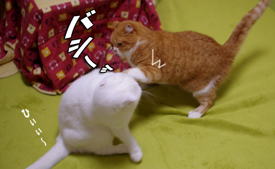 タマさんやられるわr4^44^コピー