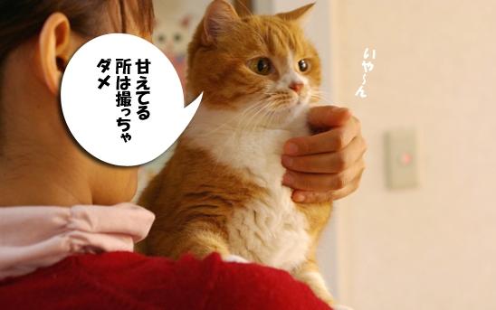 ツンデレー324--d@い@い3