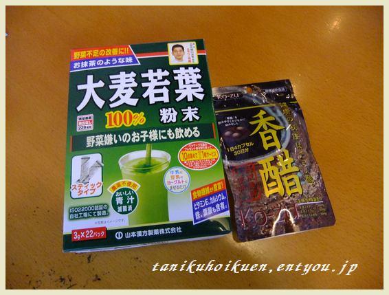 2011_0303多肉0016