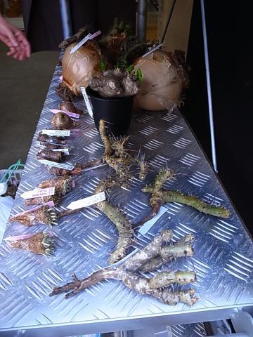 20110917_2011年秋_鶴仙園_サボテン・多肉植物フェア_4