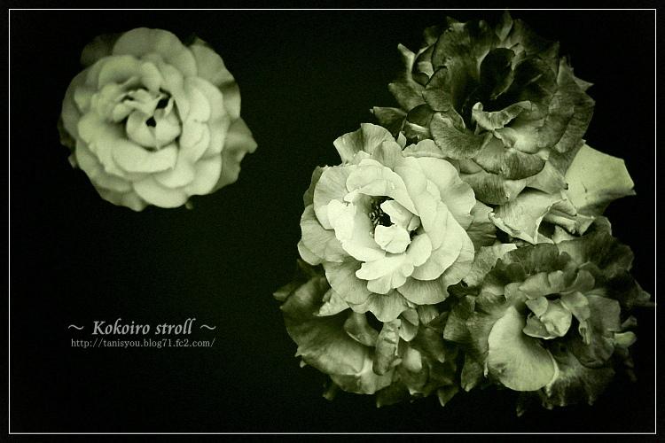 無彩の薔薇