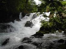 $タンポポライオンのブログ-奥入瀬渓流