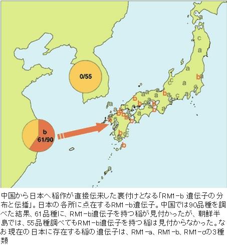 2014-11-24DNAから見た稲の伝来地図