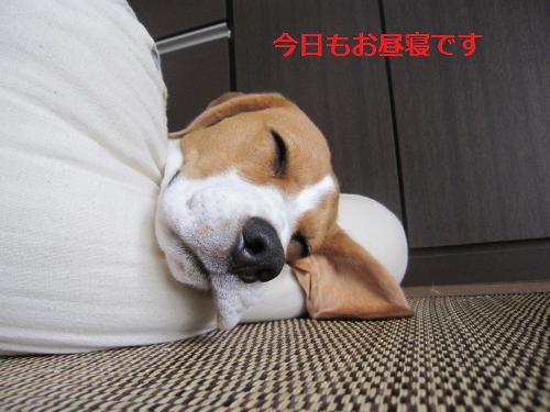IMG_1319_convert_20110903220543.jpg
