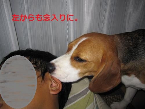 IMG_1332_convert_20110903220754.jpg