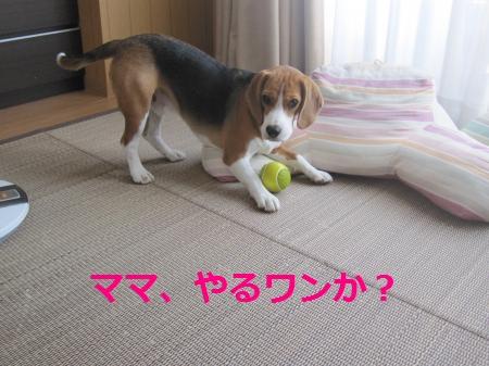 IMG_1533_convert_20110919204129.jpg