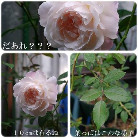cats_201311181251407ef.jpg
