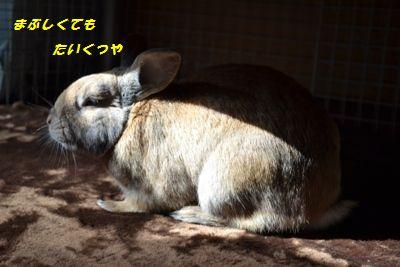 001_20130124162705.jpg
