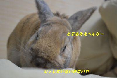 011_20130202175725.jpg
