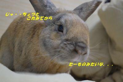 015_20130202175658.jpg